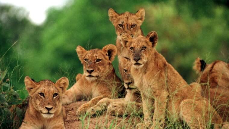 En delegation från Kommunal besökte Kruger-parken i Sydafrika i november 2012 Foto: Torbjörn Selander