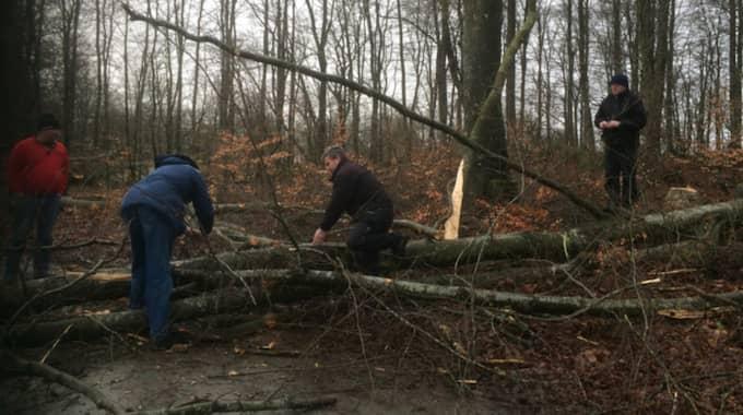 Privatpersoner fick hjälpas åt att ta bort trädet för att komma förbi. Foto: Läsarbild