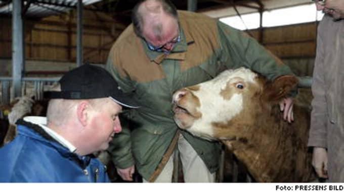 När Europas stats- och regeringschefer samlades för att hedra terrorns offer i Madrid valde Göran Persson att klappa kossorna hos Peter Holmberg på Uddberga gård i Södermanland.