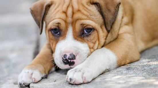 När en hund tittar på oss, så tittar vi tillbaka