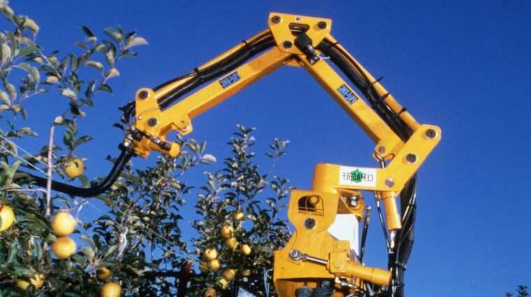 PLOCKAR FRUKT. Robotar ersätter mänsklig arbetskraft på allt fler områden. Här en fransk äppelplockarrobot i aktion. Foto: AFP