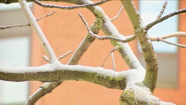 Nu kommer första snön på flera håll