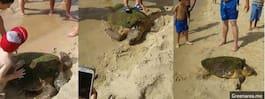 Sköldpadda lämnad att dö av turisters selfies