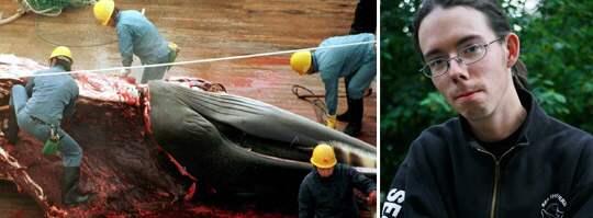 VILL RÄDDA VALARNA. Valfångarna har stött på patrull. Svenske Peter Hammarstedt leder miljögruppen Sea Shepherds som sänker deras skepp. Foto: SCANPIX / ANJA LILJEFORS
