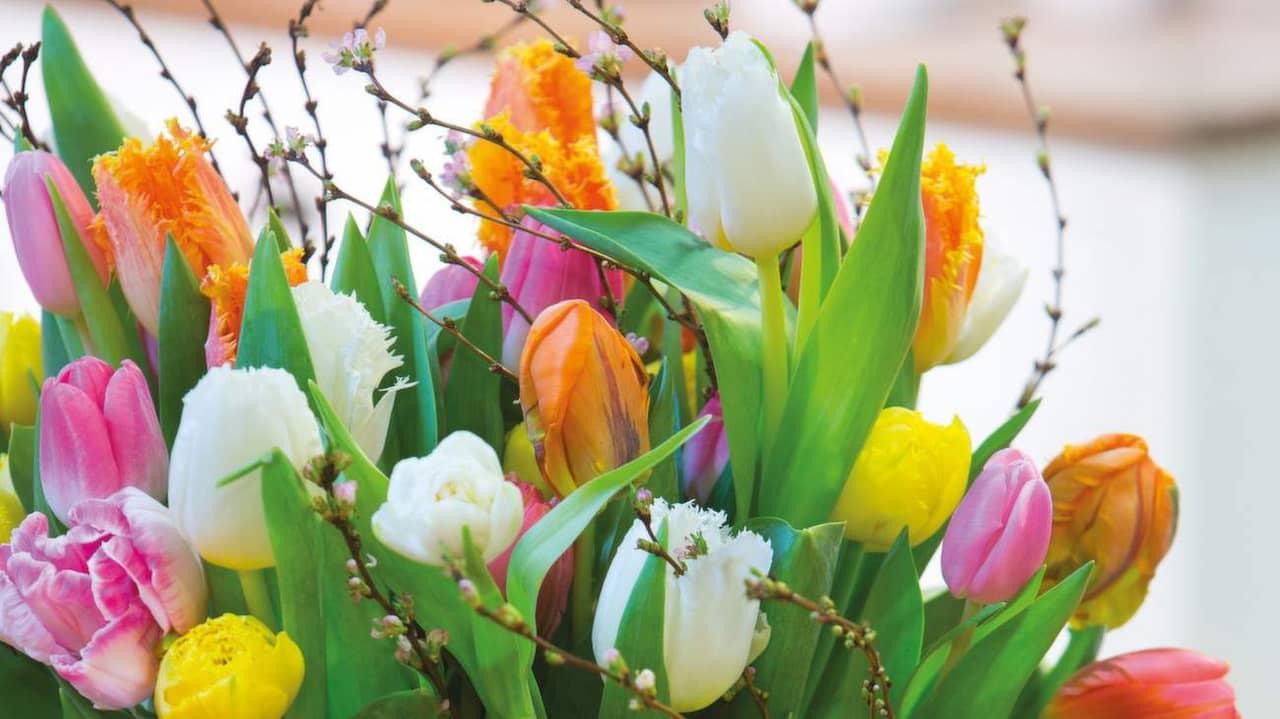 Tulpaner – 13 härliga saker du mÃ¥ste veta