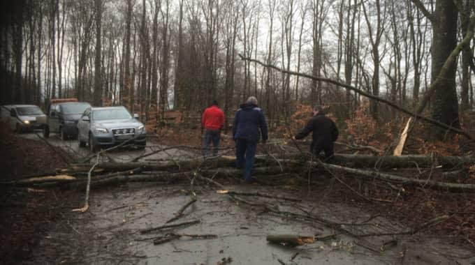 Trädet blockerade vägen. Foto: Läsarbild