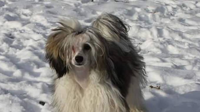 För en månad sedan förgiftades även Madeleine Pedersens fyraåriga hund Lovis. Foto: Privat