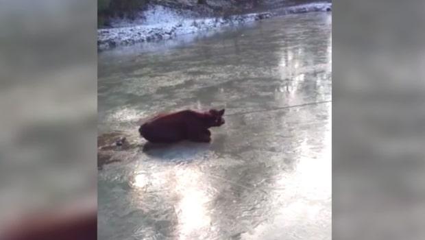 Fast på isen - se den ko-miska räddning