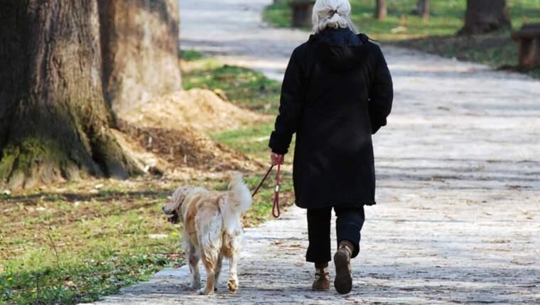 Mannen började gosa med kvinnans hund och samtidigt stal han hennes mobiltelefon. Bilden är från ett annat sammanhang. Foto: Shutterstock