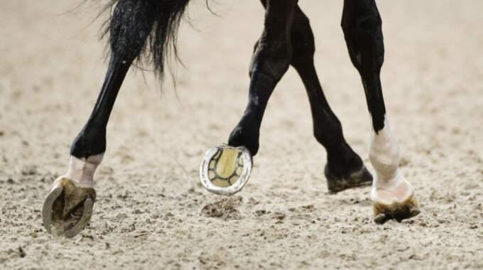 Kvark är en livsfarlig hästsjukdom. Foto: Linnea Rheborg