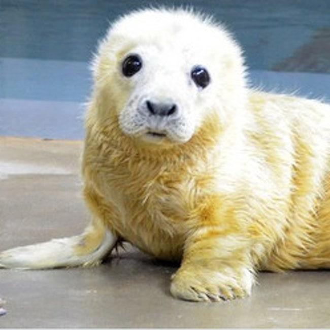 Söta sälungen på Smithsonian Zoo, som startade utmaningen.
