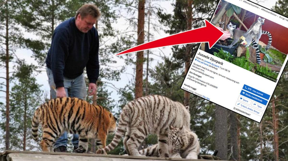 Junsele Karta Sverige.Junsele Djurpark Med Vita Tigrar Saljs Allt Om Resor