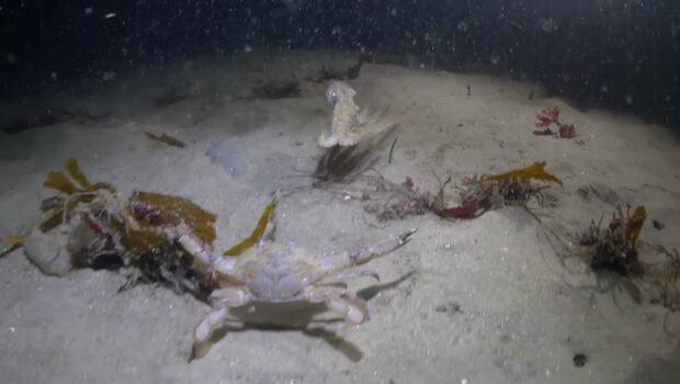 Osannolika dramat på havets botten