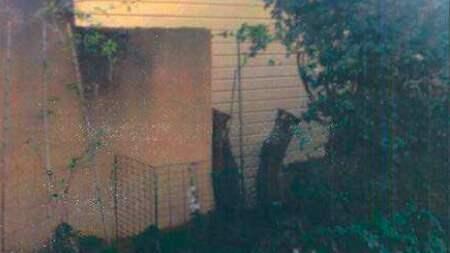 Träden sågades ned till en meters höjd utan att grannarna gett sitt tillstånd. Foto: Polisen