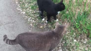 Ingers katter, Gråen och Svarten. Foto: Privat