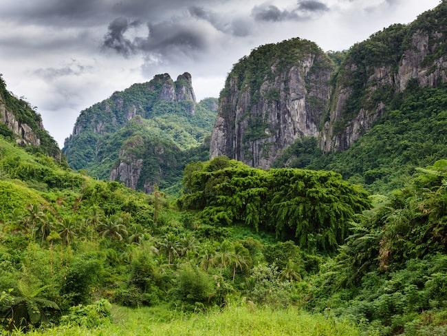 Det finns mycket att se på Fijis alla öar, inte minst skogarna på Viti Levu.