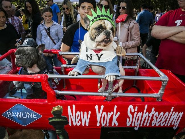 Hundparaden firades 21 oktober – tio dagar innan den stora halloweenparaden.