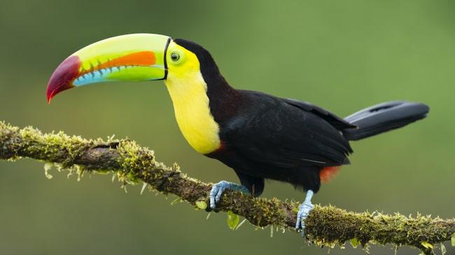 Så mycket som en fjärdedel av Costa Rica består av nationalparker och fridlysta områden. På så sätt skyddas landets extrema mångfald av djur och växter.
