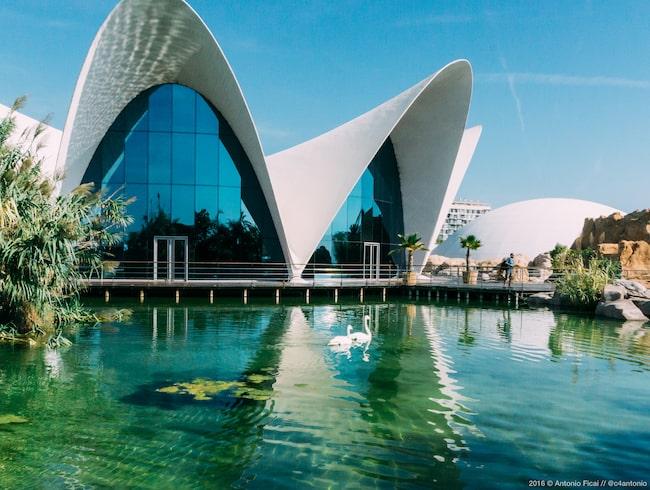 Ciutat de les Arts i les Ciències är ett två kilometer långt kultur- och vetenskapskomplex med operahus, planetarier, museer och akvarium.