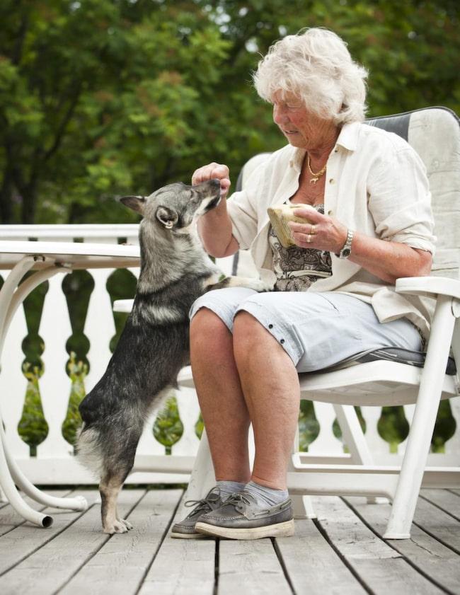 """<span><strong>TRICK: HÄMTA EN SKO</strong></span><br><strong>Steg 1: En god belöning.</strong> Lägg  ett föremål som hunden gillar framför dig och uppmuntra hunden att ta  det. Barbro sa """"får matte den"""" till sin hund Dixi. När Dixi tog  föremålet i munnen bytte Barbro snabbt ut det mot en godisbit. Efter  några gånger förstod Dixi vad det handlade om och Barbro kunde vänta  längre med att byta med godbiten. När föremålet ramlade i golvet blev  det ingen belöning utan de började om igen."""