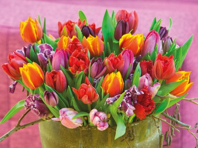 Vårkänslor med en färgglad bukett.