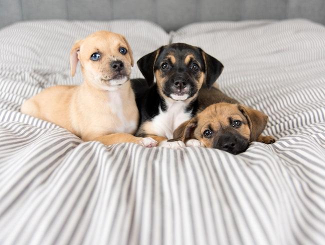 Erbjudandet ger dig en timmes privat lektid med hundarna.