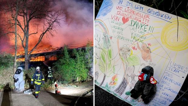 Alla apor dog efter brand på tyskt zoo brann på nyårsafton