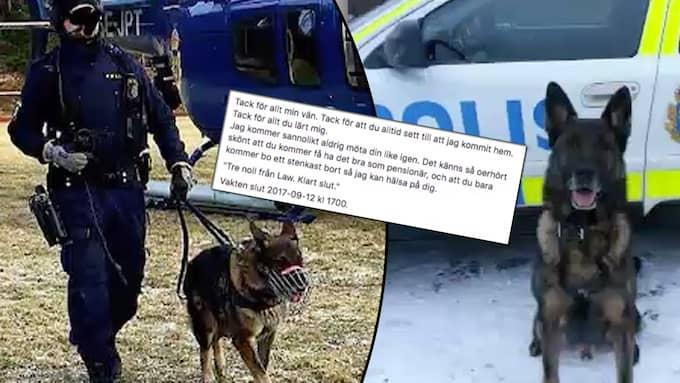 Polishund i pension. Tioåriga polishunden Law går i pension, och polisens hyllning till hans insats får många och starka reaktioner. Foto: Polisen