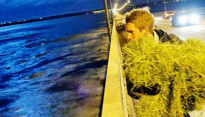 Här ordnar Kvällsposten och naturvännen David Sundling mat till de två rådjuren som sitter fast på ön i Kalmarsund. Foto: Karl Nilsson