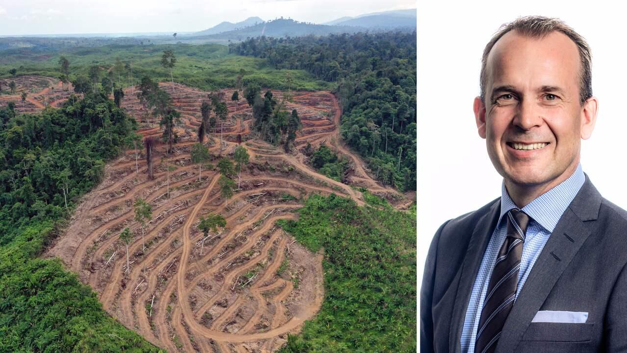 Johan Westman på AAK svarar om illegala palmoljan