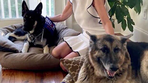 Trump hånade Bidens        hundar –här är de