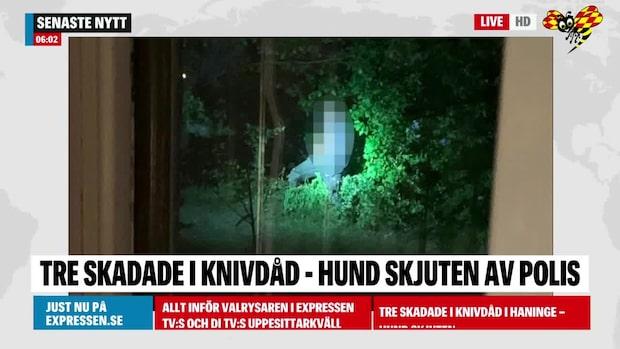 Tre skadade i knivdåd i Haninge – hund skjuten