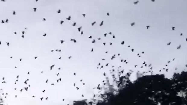Se fågelterrorn i villaområdet