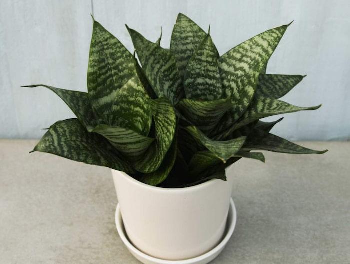 växter inomhus mörkt