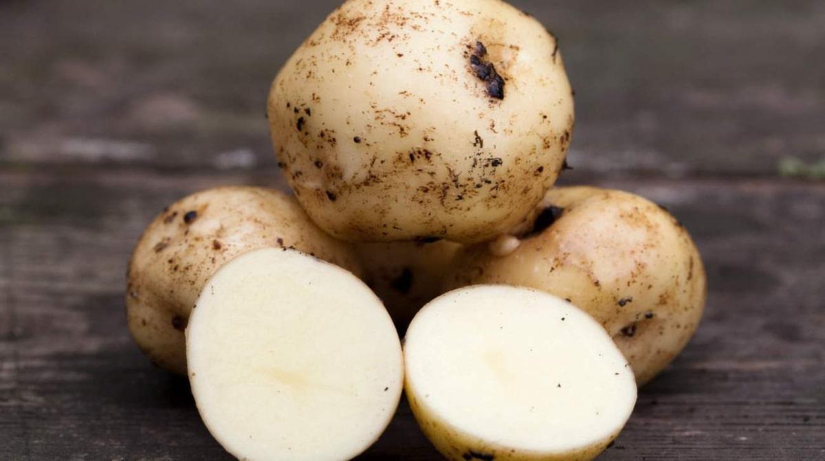 gamla svenska potatissorter