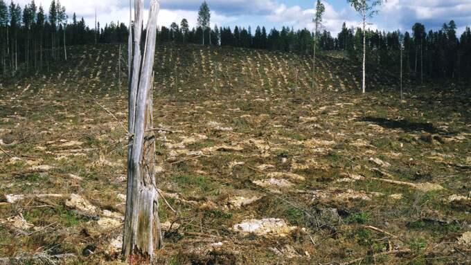 70 företag kräver ett mer hållbart svenskt skogsbruk Foto: BJÖRN WILDH