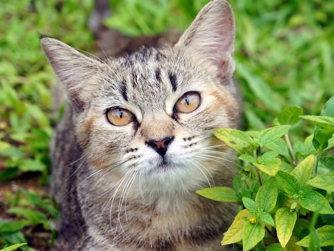 Nu vill staden Omaui förbjuda katter.
