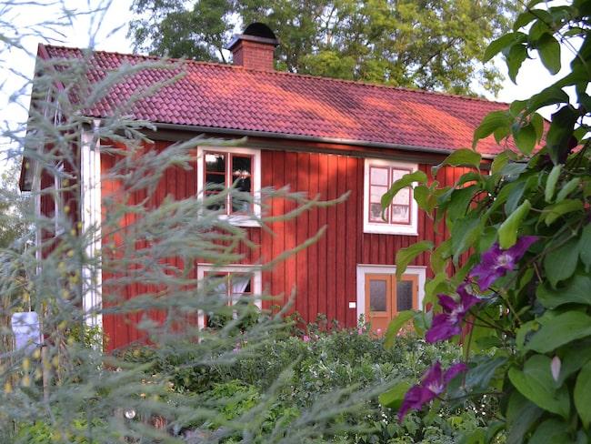 Trädgårdens rum. Höga grönsaker fungerar som avgränsare mellan trädgårdens olika rum. Sparris bildar en grön vägg sent på säsongen.