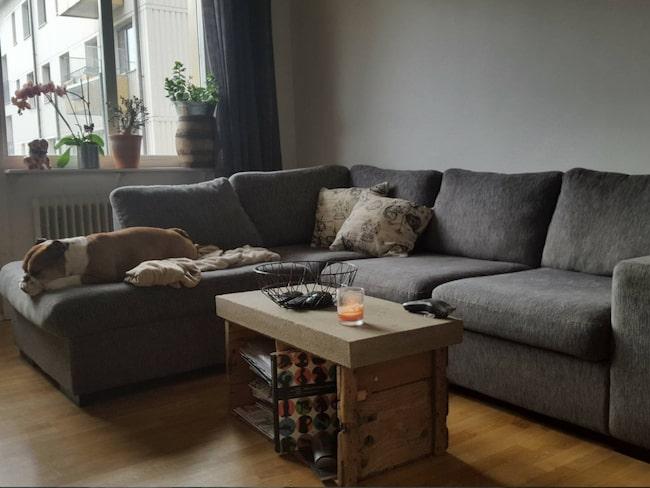 <span>Har din soffa blivit nopprig? Då måste du testa den här smarta idén! Här ligger hunden Bruno och siestar.<br></span>