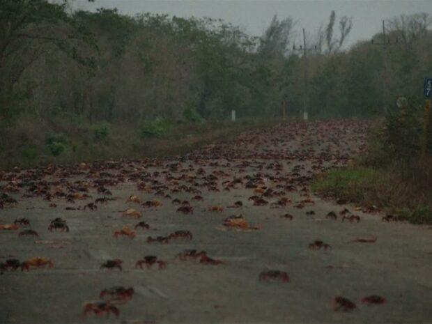 Miljontals inkräktare har tagit över Grisbukten i Kuba