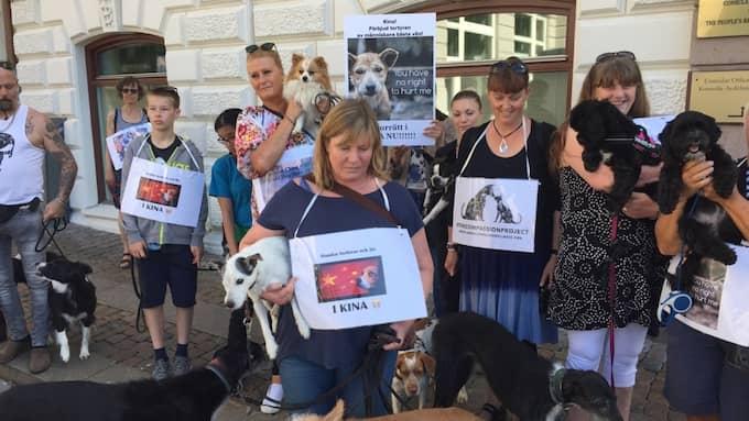Uppåt hundra hundar och deras ägare protesterade utanför Kina konsulat i Göteborg under lördagen. Foto: Björn Lindsten