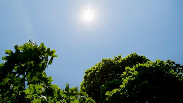 Riktigt soligt väder väntar till helgen