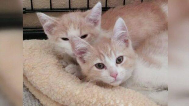 Två katter återförenade som genom ett mirakel