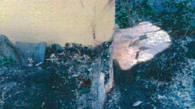 Stuibben är det enda som blev kvar efter ett träd- Foto: Polisen