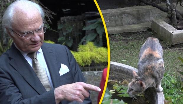 Kungen får syn på djuret –avbryter intervjun