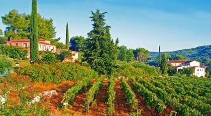 Svenskt i Frankrike. Domaine Rabiega i Provence bjuder på såväl idylliska omgivningar som smakrika och kraftfulla viner. Gården ägs av en svensk familj.