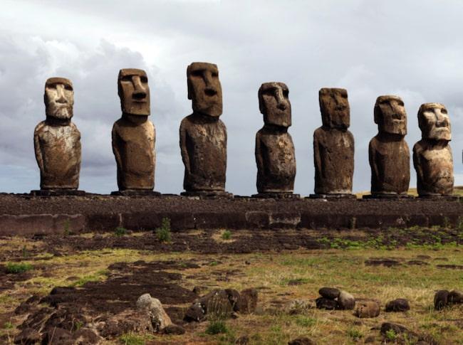 Snittvikten på de 887 moai man känner till är dryga tolv ton.