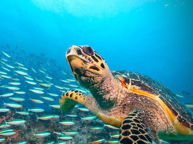 Succén för arbetet med att rädda de utsatta sköldpaddorna framgår av en ny världsomfattande rapport.