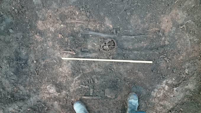 Grävarbetare hittade kvarlevorna efter två vikingar mitt i Falköping. Foto: Anders Berglund, Västergötlands museum