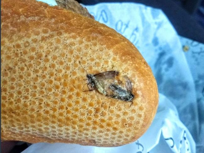 Två mosade insekter missprydde frukostmackan på Dublins flygplats.